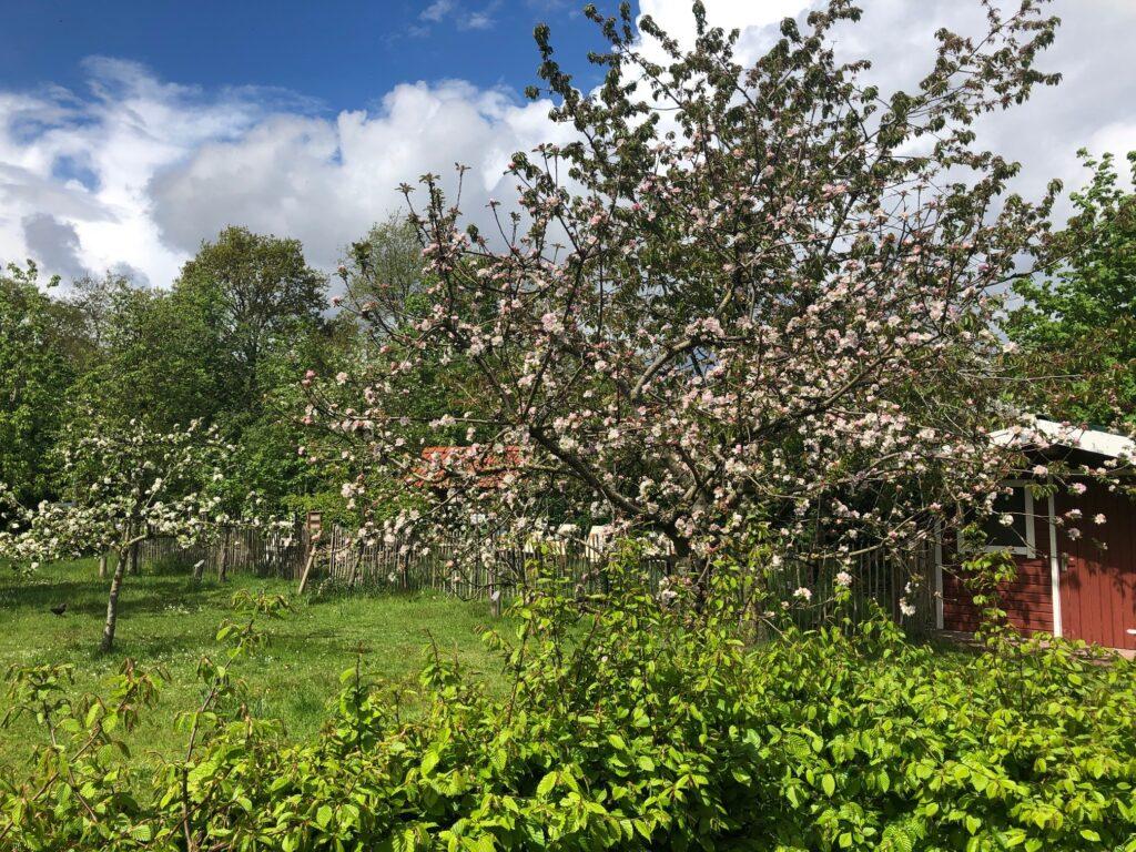 Blütenmeer im Schulgarten